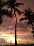 Por do sol brilhante e palmeiras Imagem de Stock