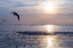 Por do sol cênico com voo do pássaro Imagens de Stock