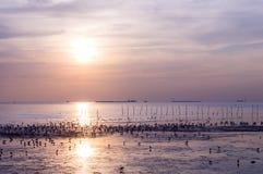 Por do sol cênico com voo do pássaro Imagens de Stock Royalty Free