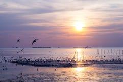 Por do sol cênico com voo do pássaro Foto de Stock