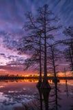 Por do sol cênico, silhuetas do cipreste, Illinois Imagem de Stock