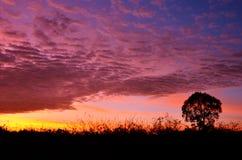 Por do sol colorido com a silhueta da árvore Fotografia de Stock Royalty Free