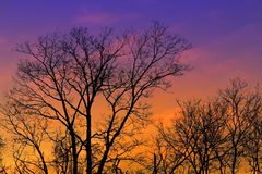 Por do sol colorido do inverno Foto de Stock