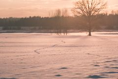 por do sol colorido do inverno com os raios claros que vêm com o grande Fotografia de Stock