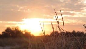 Por do sol colorido no campo, por do sol bonito no selvagem vídeos de arquivo