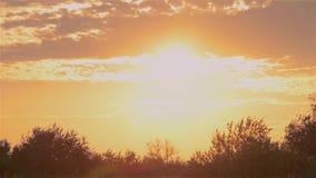 Por do sol colorido no fundo das árvores, por do sol dourado no campo video estoque