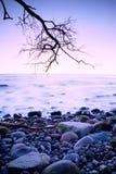 Por do sol colorido romântico no mar ondulado Praia rochoso com árvore e céu cor-de-rosa no espelho da água Imagens de Stock