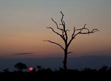Por do sol com árvore inoperante Imagens de Stock Royalty Free