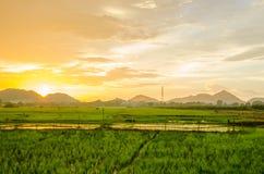 Por do sol com arroz do campo Fotos de Stock Royalty Free