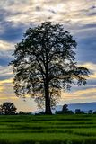 Por do sol com azul entre as nuvens e uma silhueta de uma árvore enorme do algodão de seda na vila de Chitwan imagens de stock