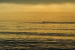 Por do sol com gaivotas Foto de Stock Royalty Free