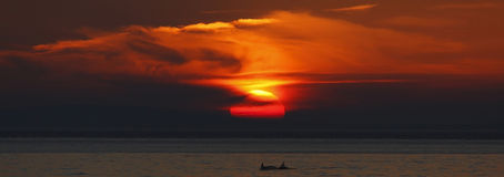 Por do sol com golfinhos Fotografia de Stock Royalty Free