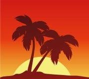 Por do sol com palmas Imagens de Stock