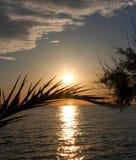 Por do sol com palmeira Imagens de Stock