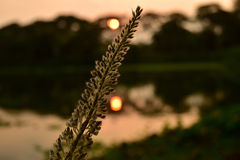 POR DO SOL COM PLANTAS NATURAIS Fotografia de Stock Royalty Free