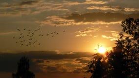 Por do sol com pombos fotografia de stock royalty free