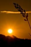 Por do sol com primeiro plano Imagem de Stock Royalty Free