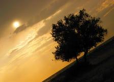Por do sol com silhueta da árvore Fotos de Stock