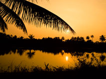 Por do sol com a silhueta da filial da palma Fotografia de Stock Royalty Free