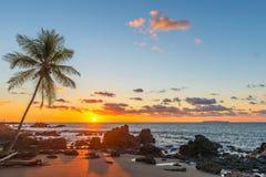 Por do sol com silhueta da palmeira, Costa Rica imagens de stock