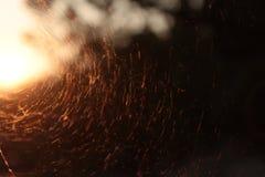 Por do sol com uma Web do ` s da aranha Fotografia de Stock Royalty Free
