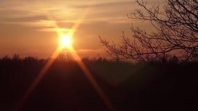 Por do sol contra um contexto dos arbustos e das árvores vídeos de arquivo