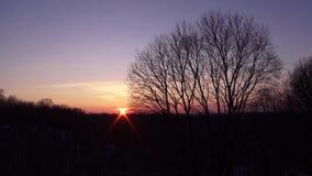 Por do sol contra um contexto dos arbustos e das árvores Hd completo video do lapso de tempo filme