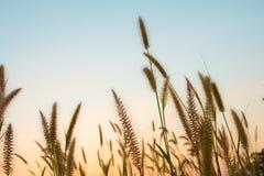 Por do sol da flor, céu da beleza foto de stock
