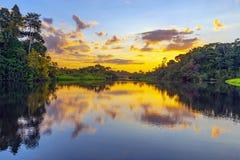 Por do sol da floresta úmida das Amazonas, Ámérica do Sul imagem de stock