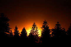 Por do sol da floresta Imagem de Stock Royalty Free