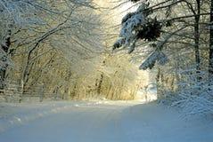 Por do sol da floresta do inverno Imagem de Stock Royalty Free