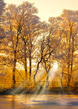 Por do sol da floresta do inverno Fotos de Stock Royalty Free