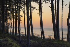 Por do sol da floresta do pinho no mar Báltico Foto de Stock