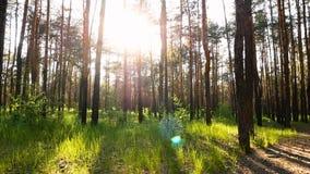 Por do sol da floresta do verde da natureza filme