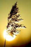 Por do sol da grama de prado Imagem de Stock Royalty Free
