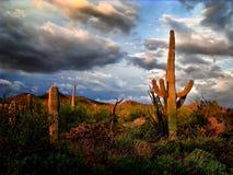 Por do sol da monção no deserto de Sonoran Imagens de Stock Royalty Free