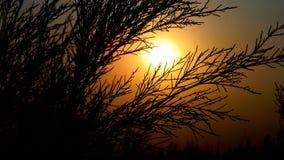 Por do sol da noite Fotografia de Stock