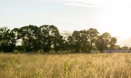 Por do sol da paisagem do campo com luz solar Fotos de Stock