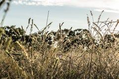 Por do sol da paisagem do campo com luz solar Imagens de Stock