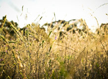 Por do sol da paisagem do campo com luz solar Foto de Stock Royalty Free
