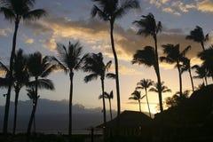 Por do sol da palmeira foto de stock royalty free