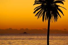 Por do sol da palmeira Fotos de Stock Royalty Free