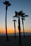 Por do sol da praia de Veneza Fotos de Stock Royalty Free