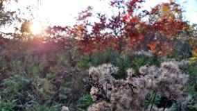 Por do sol da queda de Michigan Imagem de Stock