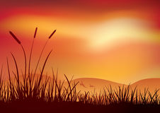 Por do sol da região pantanosa. Fotografia de Stock Royalty Free