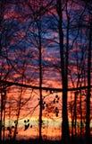 Por do sol da silhueta Imagens de Stock Royalty Free