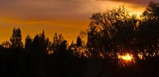 Por do sol da silhueta Fotografia de Stock