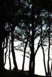 Por do sol da silhueta da árvore em Phu Rua Imagens de Stock Royalty Free