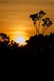 Por do sol das Amazonas Imagem de Stock