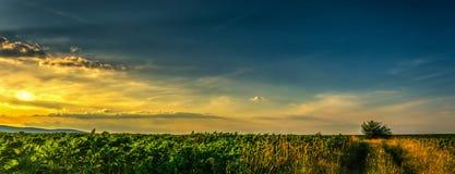 Por do sol de aproximação Imagem de Stock